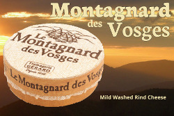 Montagnard des vosges washed rind cheese